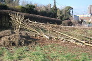 Completed Hedge