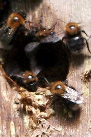 Tree bees 2 - Copy (2)